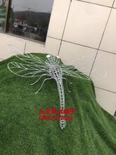 不锈钢镂空蜻蜓雕塑图片及价格图片