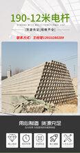 供应水泥电杆,钢纤维电杆,直线电杆,转角电杆,加强电杆图片