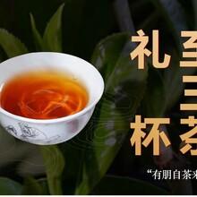 石家莊野生武夷紅茶批發圖片