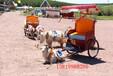 廣西柳州忻城縣羊拉車矮馬馬車黃包車出租出售,價格實惠