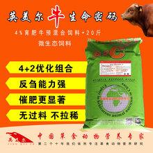 肉牛催肥飼料預混料牛飼料廠家牛用飼料長的快牛催肥飼料配方圖片