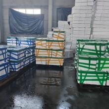 滨州花蛤批发价格图片