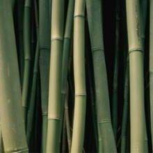 金華原竹批發價格圖片