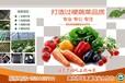 壽光蔬菜祥佳蔬菜合作社精品蔬菜
