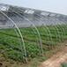 草莓種植大棚價格圓管大棚造價大棚橢圓管批發廠家直銷