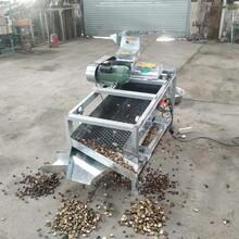 珠海茶籽剥壳机生产厂家图片