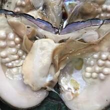 批发淡水珍珠河蚌多珠蚌单珠蚌桶装图片