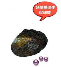 珍珠活蚌可自己动手开自家养殖天然淡水珍珠河蚌多珠混色鲜活图片