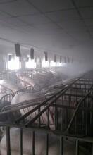 養殖場消毒選擇米孚自動消毒機圖片