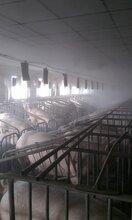 养殖场消毒选择米孚自动消毒机图片