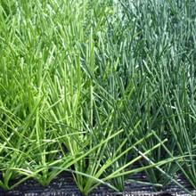 人造草坪鋪設-深圳運動草坪鋪設-各類球場建設工程-美觀-施工