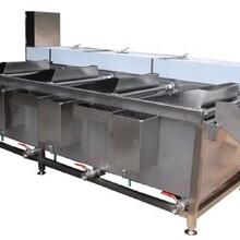 常州洗菜機廠家價格圖片