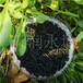 新疆1.5mm柱狀活性炭價格