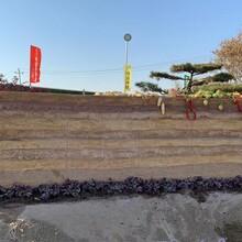 河南洛阳民宿夯土墙的做法夯土墙墙面包工包料图片