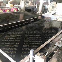 信誉棋牌游戏建筑覆膜板全整芯桉木一级板图片