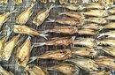 长沙周边垂钓好去处长沙县龙头尖山庄图片