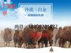 新疆駱駝駝奶粉代加工,廠家低價,駝奶粉貼牌代加工