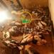 养殖)福建福州鸭苗价格报价(三花杂交鹅苗市场——厂家铸造辉煌