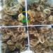 福建龙岩小鸡苗批发地址贵州五黑一绿鸡苗出售