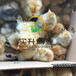 养殖)福建莆田脱温鸭苗养殖厂(红腹锦鸡苗行情——大图