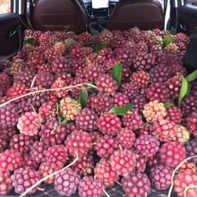 湘潭黑老虎水果出售图片