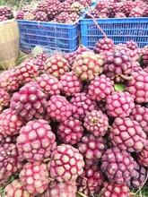珠海黑老虎水果批发图片