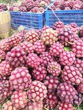 黄石黑老虎水果价格图片