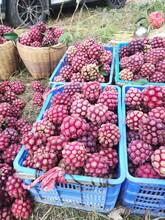 鄂州黑老虎水果供应图片