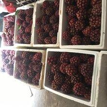 达州黑老虎水果出售图片