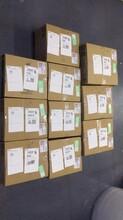 莆田黑老虎种子价格图片