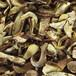茂名白蔥牛肝菌干貨批發
