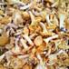 麗水雞油菌銷售