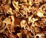 茂名雞油菌功效與禁忌