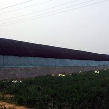 肉鸽养殖大棚建设方法图片