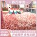 温州厂家直销大小型商场淘气堡百万海洋球池儿童乐园室内游乐设施