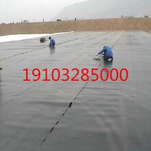 防滲土工膜一布一膜土工膜批發價格土工膜廠家HDPE土工膜圖片