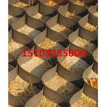 蜂巢土工格室土工格室廠家HDPE護坡防滑土工格室直銷鑫盛圖片