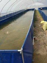 山东省户外大型高密度养殖鱼类养殖金鱼池帆布鱼池厂家定制尺寸图片