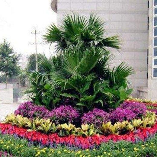 室外绿植养护图