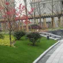 相城区室外绿植养护服务价格图片