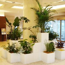 吴中区室内绿植租摆公司服务图片