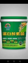 山东济宁厂家直销蛋白酵素菌桶装膏状冲施肥图片