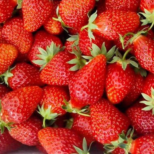 济南全明星草莓苗价格表