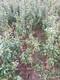 重庆石榴树苗种植时间图
