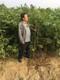 2公分香椿苗图