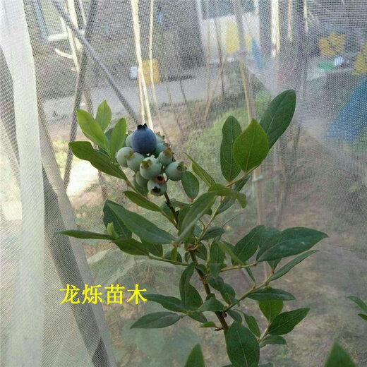 伊犁哈萨克明星蓝莓高产合理密植栽培技术