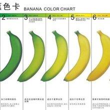 威驰JTDT-1906乙烯催熟机香蕉催熟机果蔬催熟催色机图片