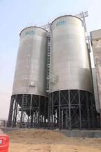 飼料廠常用糧食鋼板倉圖片