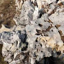 浙江天然景觀石風景石太湖石假山石窟窿石奇石