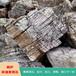 杭州天然園林景觀石風景石龜紋石千層石假山石